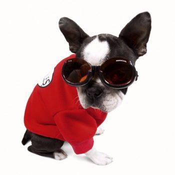 Doogles lunettes pour chien