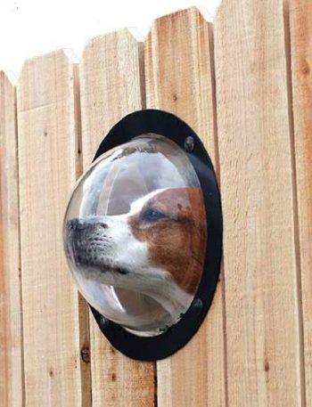 Petpeek hublot pour chien