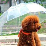 Parapluie pour animaux