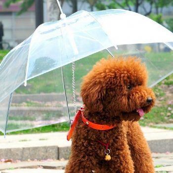Parapluie insolite pour animaux