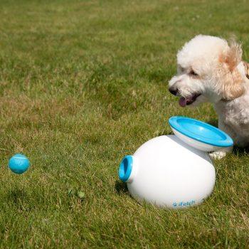 Lanceur de balles automatique pour chien insolite