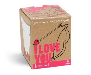 Pois de senteur Cupidon à faire pousser, cadeau insolite pour la Saint Valentin