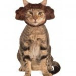Coiffure Princesse Leïa pour chat