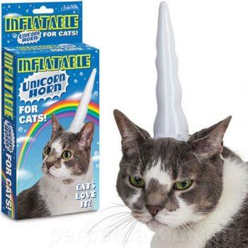 Corne de licorne insolite pour chat