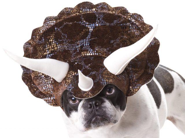 Cornes de tricératops insolite pour chien