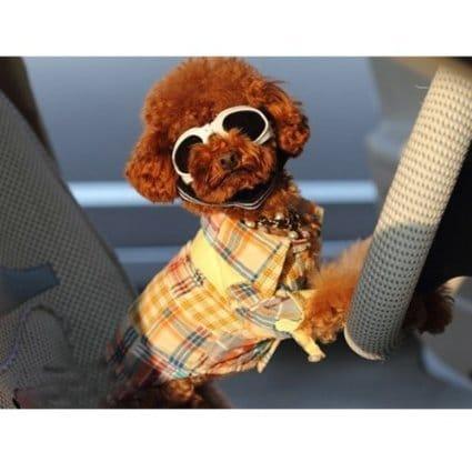 Lunettes de soleil insolite pour chien