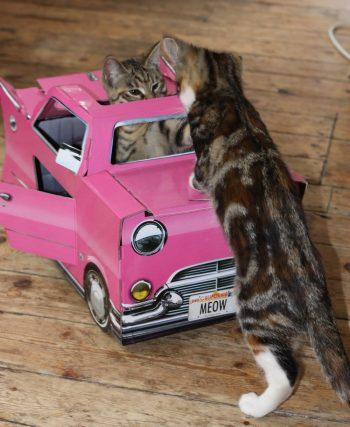 Abri voiture original pour chat