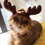Bois de renne pour chats