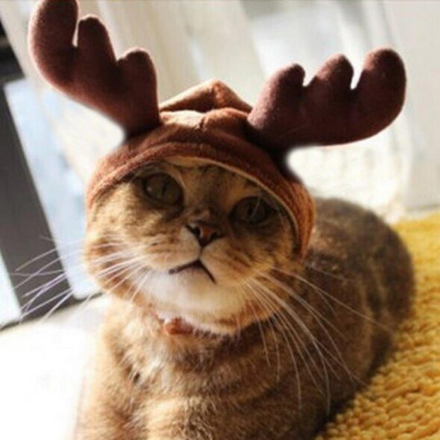 Casquette renne insolite pour chat