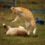 10 objets insolites pour votre chat #1