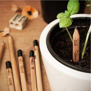Crayons insolites à planter