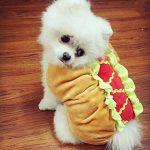 Manteau hot-dog pour chien et chat