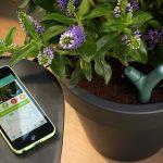 Capteur pour plantes