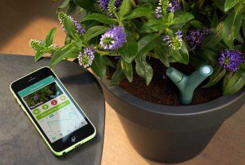 Capteur pour plantes insolite Parrot Flower Power