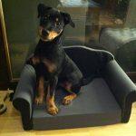 Canapé pour animaux