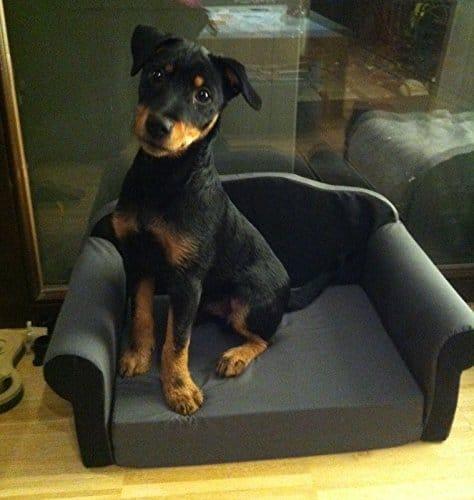 Canapé insolite pour chiens et chats
