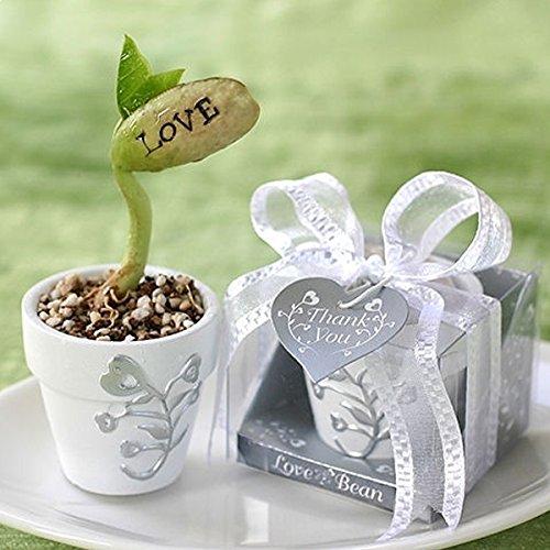 Plant de haricot avec message d'amour saint valentin insolite