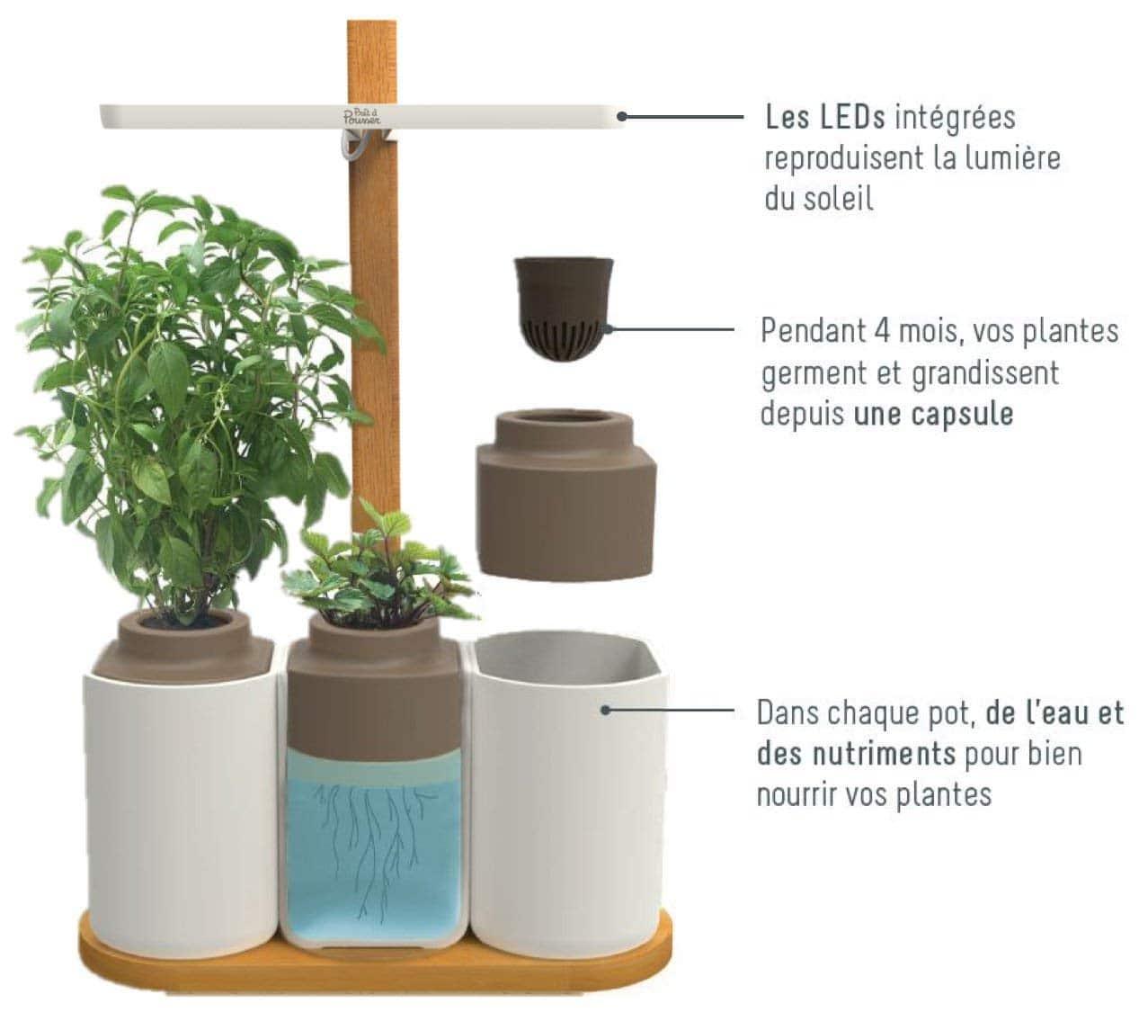 Smart Lilo potager d'intérieur prêt à pousser insolite maison