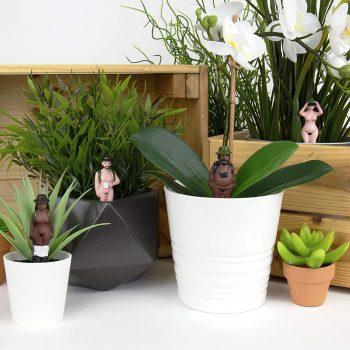 Décorations sexy pour pots de fleurs