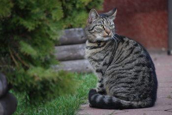Occupez-vous de votre chat pour sa santé et son bien-être